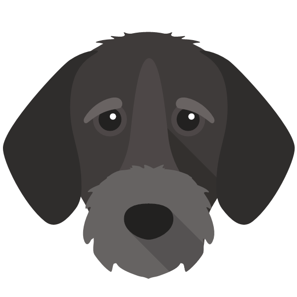 germanwirehairedpointer-02 Yappicon