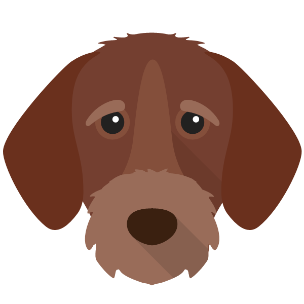 germanwirehairedpointer-03 Yappicon