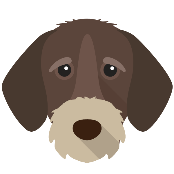 germanwirehairedpointer-04 Yappicon