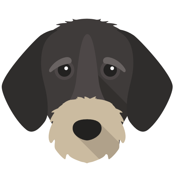 germanwirehairedpointer-05 Yappicon