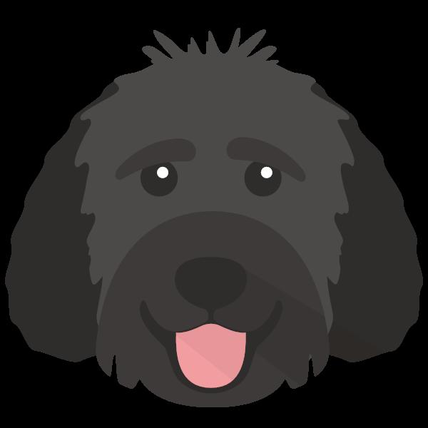 BADER icon