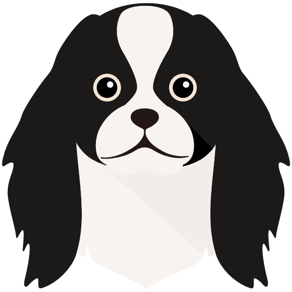 the Japanese Chin
