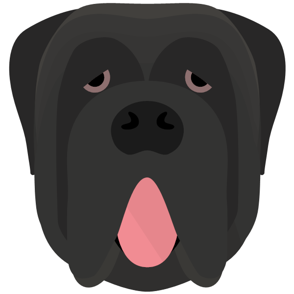 the Neapolitan Mastiff