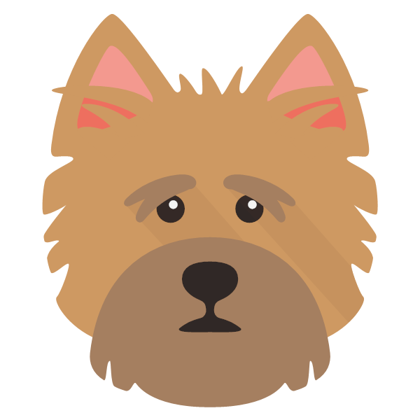 norfolkterrier-02 Yappicon
