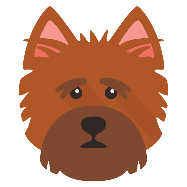norfolkterrier-03 Yappicon