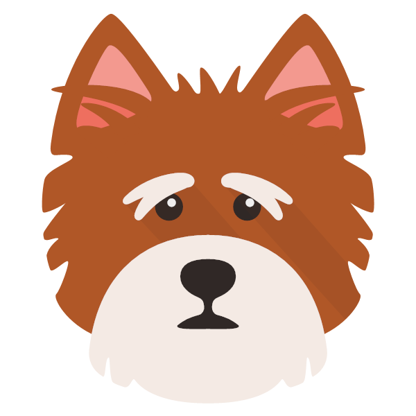 norfolkterrier-04 Yappicon