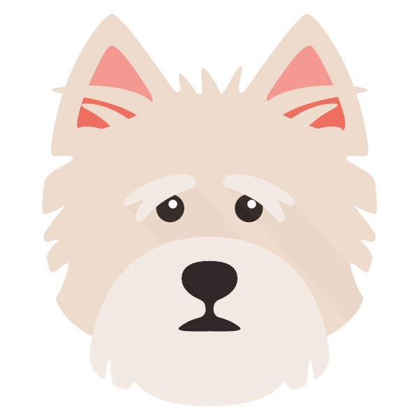 norfolkterrier-05 Yappicon