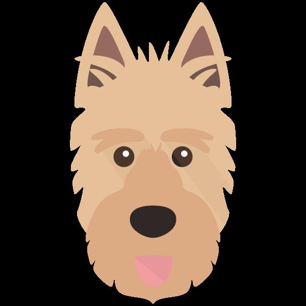 Phoebe icon
