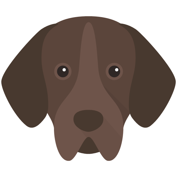 the Portuguese Pointer