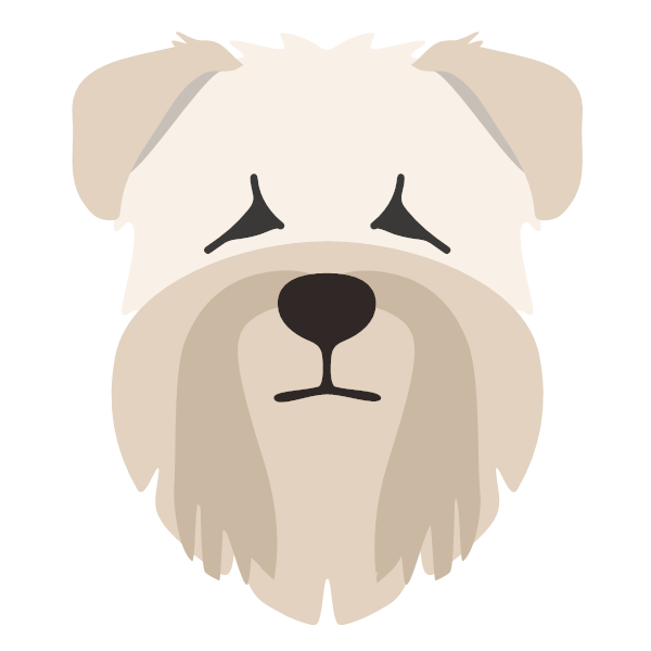 softcoatedwheatenterrier-01 Yappicon