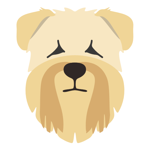 softcoatedwheatenterrier-02 Yappicon