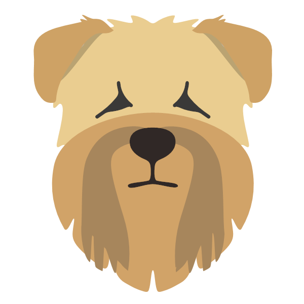 softcoatedwheatenterrier-03 Yappicon
