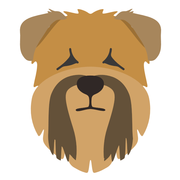 softcoatedwheatenterrier-04 Yappicon