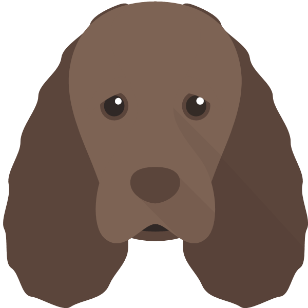 the Sussex Spaniel