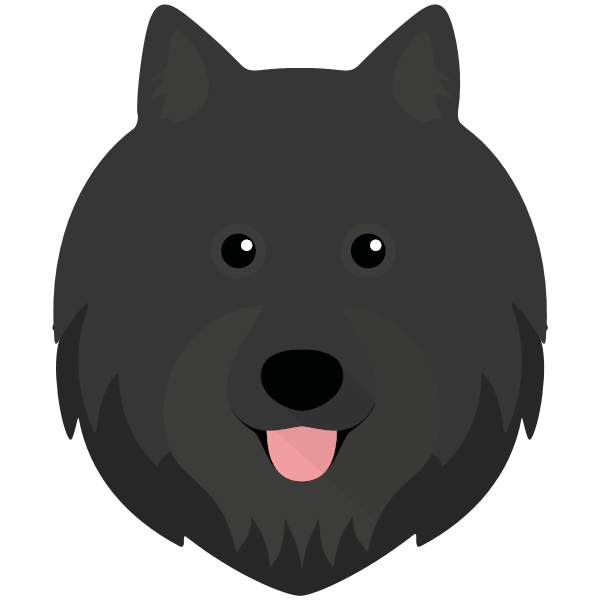 the Swedish Lapphund